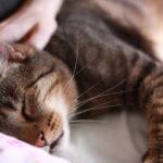 Katzenohren reinigen