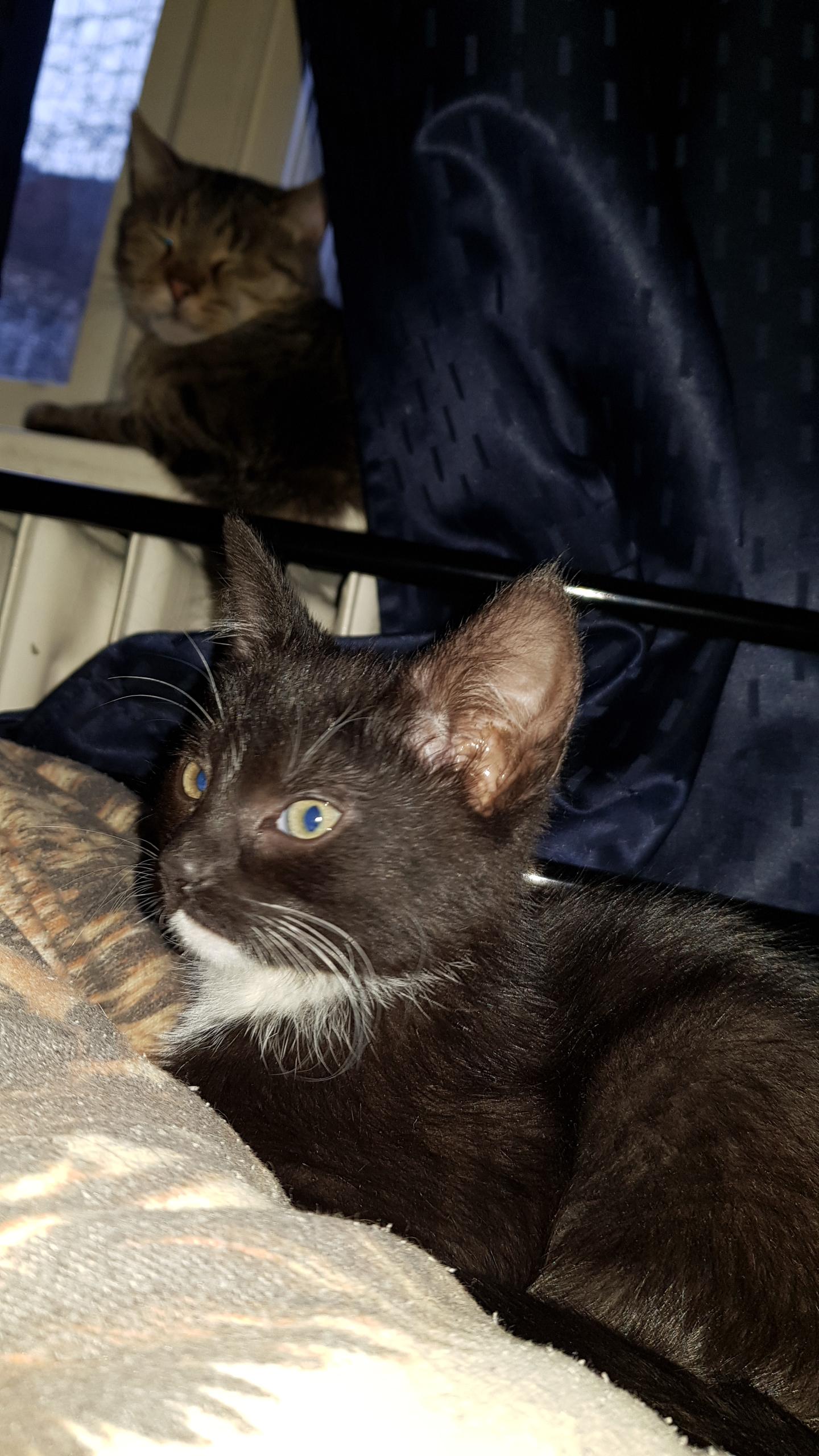 Katzenerziehung So Erziehst Du Deine Katze Richtig Katze Org