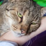 Bindung Katze Mensch