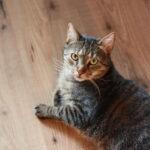 Clickertraining Katze