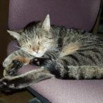 Schlafender Kater