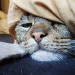 Verschlafener Kater