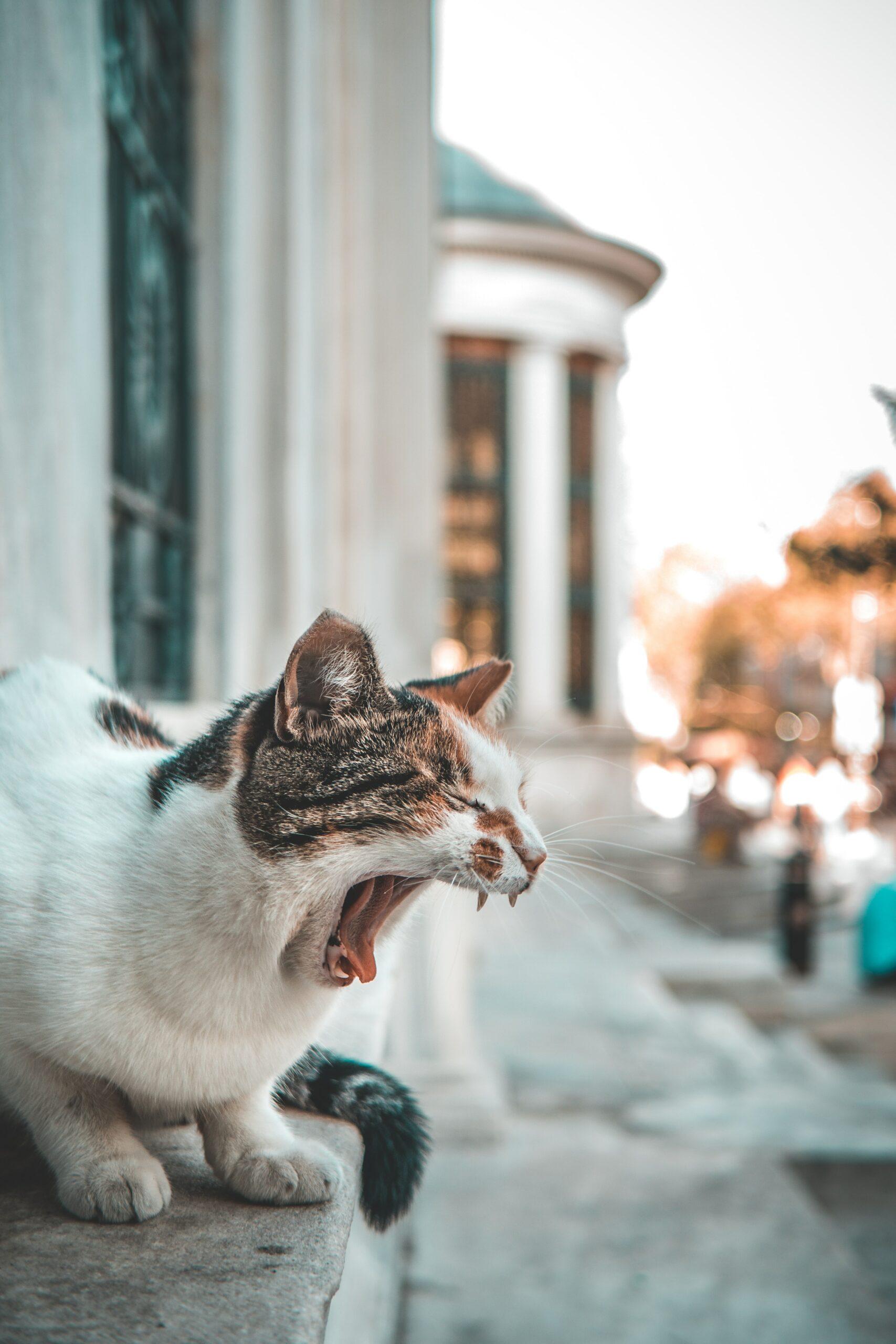 Katzen und Religion