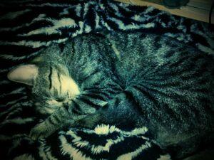 Traurige Katze