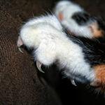 Katzenkrallen
