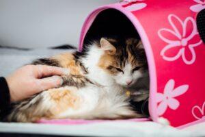 Tierarzt-Hausbesuch
