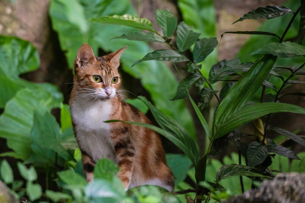 Grünpflanzen und Katze