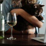 Katzen & Alkohol