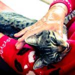 Katze im Pflegeheim