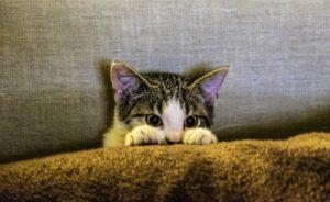 Verängstigte Katze