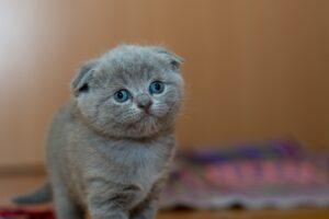 Ängstliche Katze