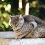 Katze schmollt