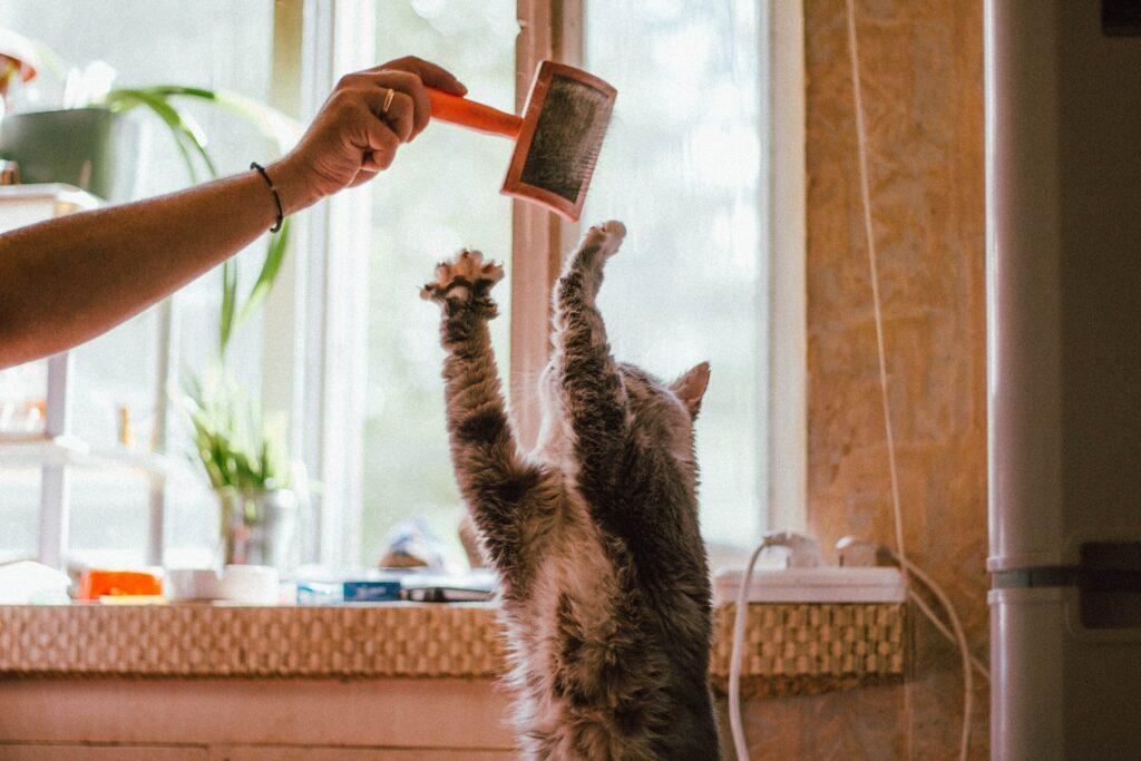 Fellbürste Katze