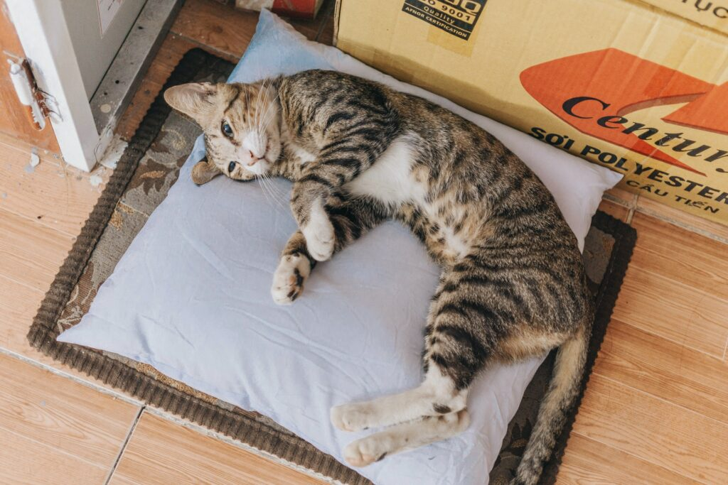 schlafposition katze