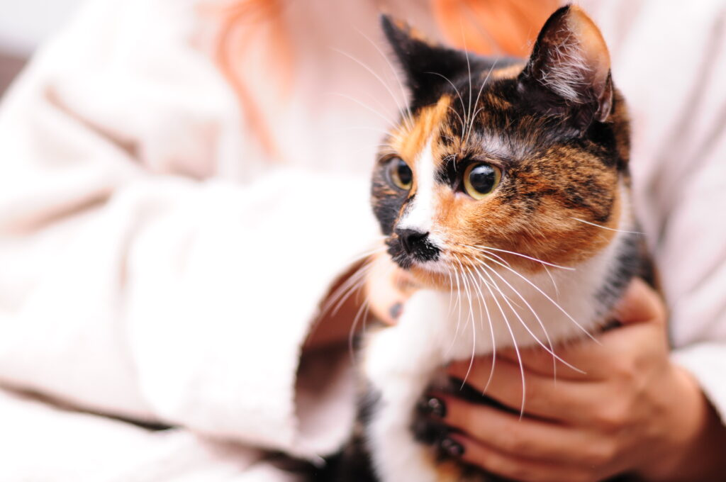 Katzenkrankversicherung