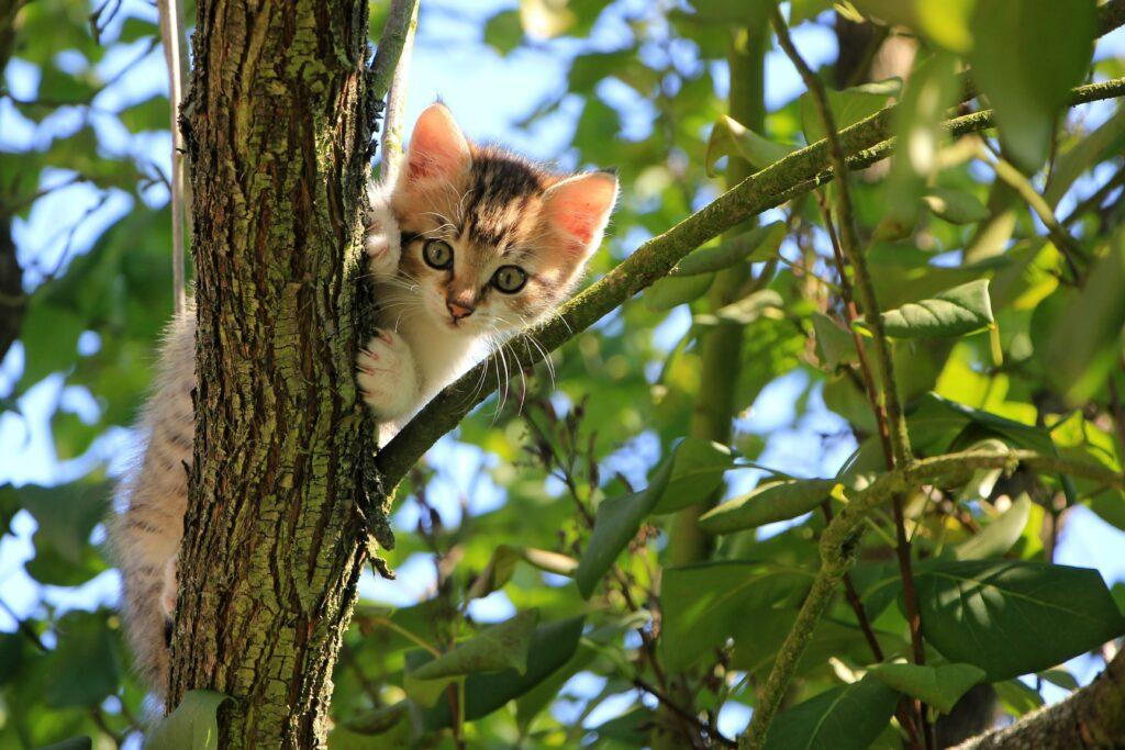 Katze vom Baum retten