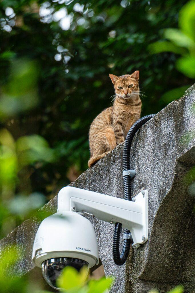 Überwachungskameras für Katzen