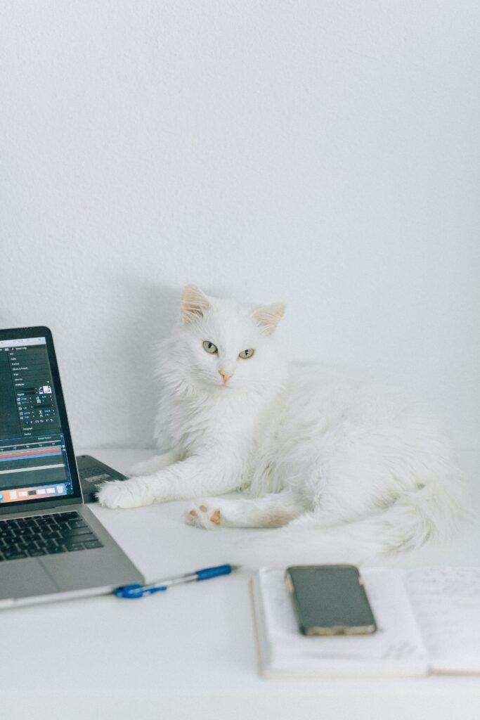 Katze von der Steuer absetzen